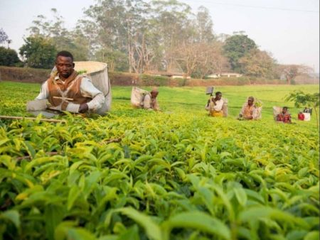 The Cabri Sector Dialogue On The Policy Challenge And Efficiency In Agriculture Spending